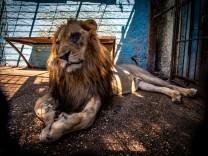 Tierquälerei Zoo
