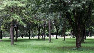 Friedwald auf dem Kraillinger Friedhof