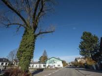 Brunnthal, bei Galerie Kersten, Otterloher Straße 8, alter Baum soll gefällt werden,