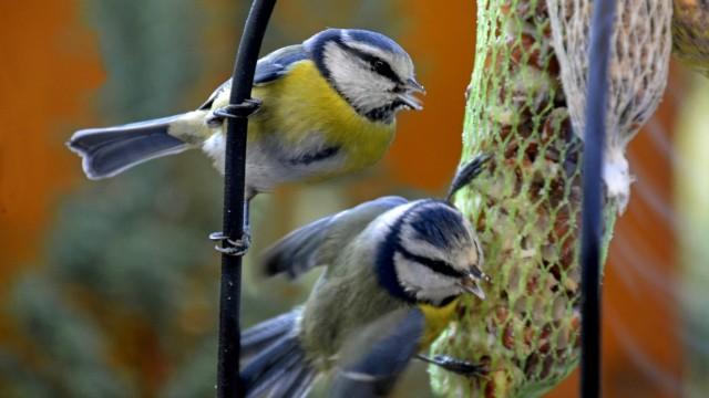 Vögel Im Winter In Den Garten Locken So Gehts München