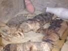 Katzen-Mumien und Skarabäen (Vorschaubild)