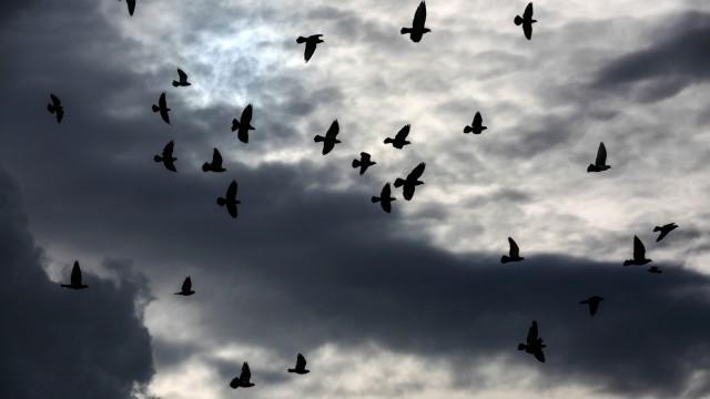 Der Himmel voller Tauben