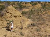 Termitenhügel überdauern Jahrtausende