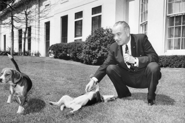 President Johnson With Pet Beagles