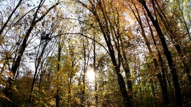 Waldzustand