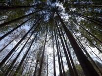 Wald bei Grünwald, 2013