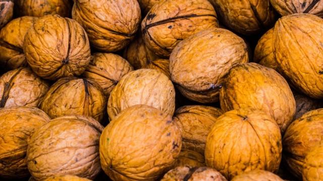Walnuss Persian Walnut *** Walnut Persian Walnut PUBLICATIONxINxGERxSUIxAUTxHUNxONLY 1084901378