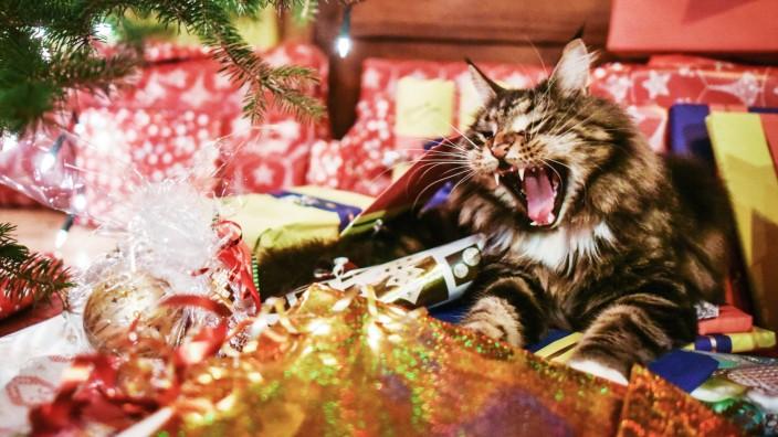 Weihnachtsgeschenke mit Katze