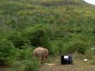 Thailand: Musikbegeisterte Elefanten (Vorschaubild)