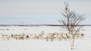 Klimawandel In der Kältesteppe
