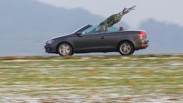 Transport eines Christbaums in einem Cabrio