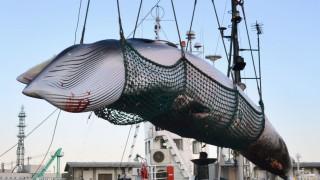 Wale Internationale Walfangkommission