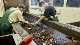 Mülltrennung Biomüll