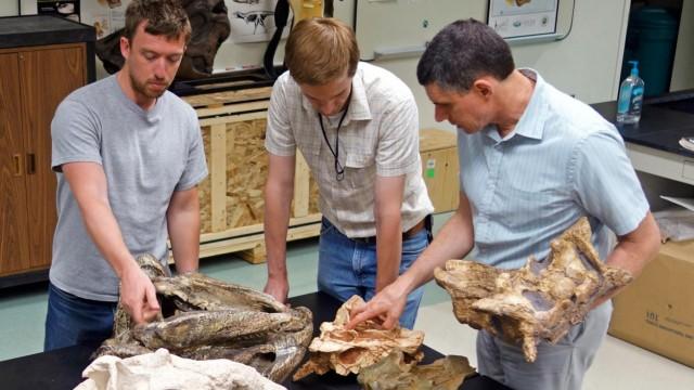 Nase gepanzerter Dinosaurier diente als Klimaanlage