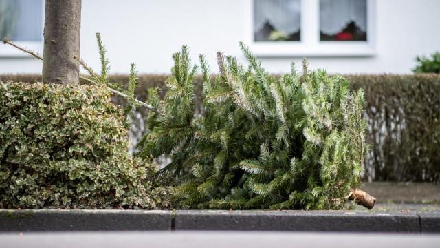Alter Weihnachtsbaum