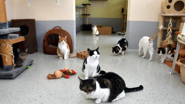 Erding Tierschutzverein Erding