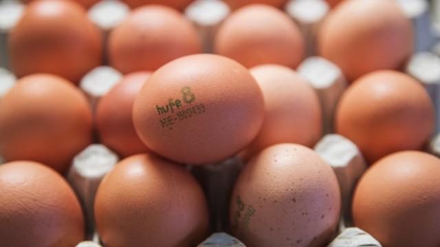 Hufe 8 liefert Bio-Eier