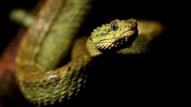 Biologie Schlangengift