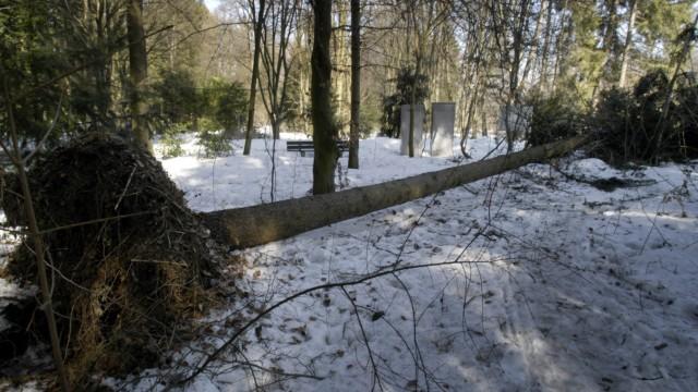 Schneebruch im alten Westfriedhof, 2006