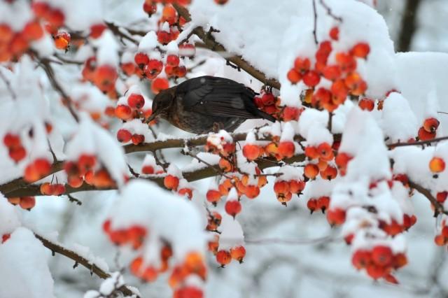 Utting : Winterlandschaft