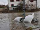 Nach dem Schnee steigen die Flüsse an - vor allem in Franken (Vorschaubild)