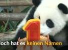 Großer Bahnhof für Großen Panda (Vorschaubild)
