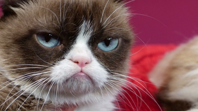 """´Grumpy Cat"""" erhält Doppelgänger bei Madame Tussauds"""