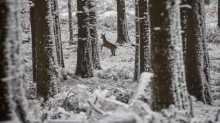 """Jagdverband fordert Rücksicht auf Wild im ´Wintermodus"""""""