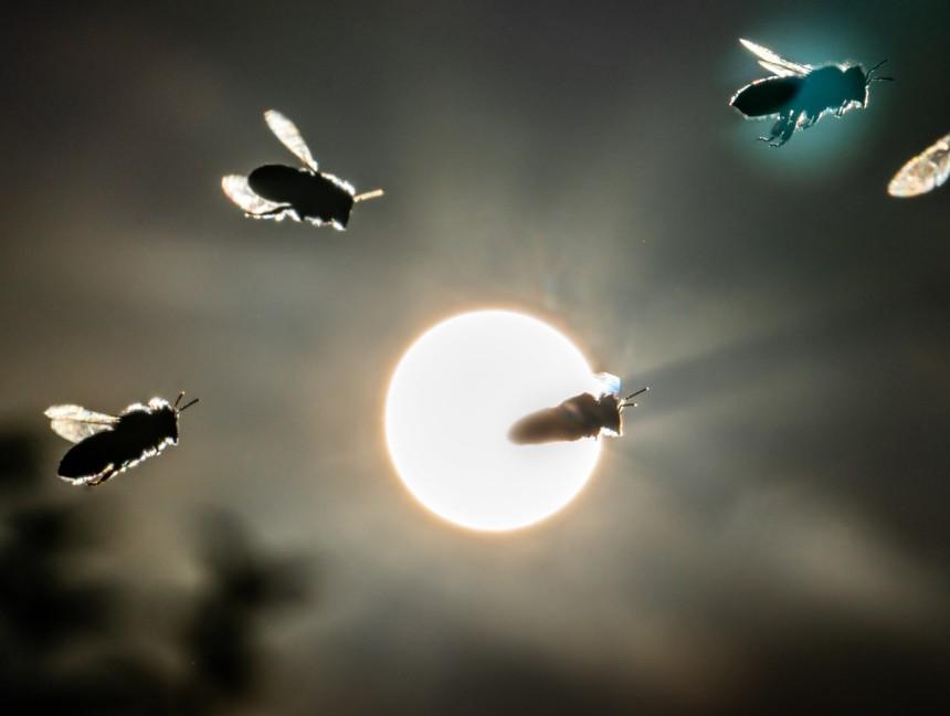 3 AnpassungsfäHig Belege 100% Original 2 Luftwaffe
