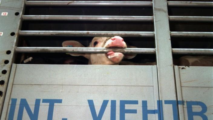 Viehtransporter Tierärztin Tierexport