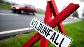Wildunfälle in Schleswig-Holstein