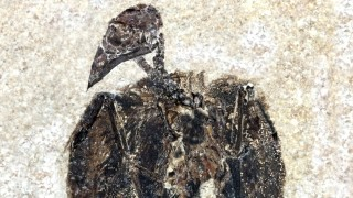 Süddeutsche Zeitung Wissen Evolution von Vögeln