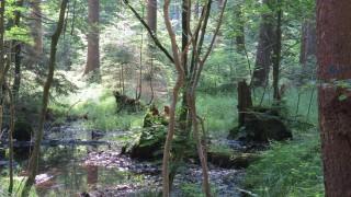 Kleiner Sumpf am Wegesrand im Waldgebiet Murnau zwischen Leutstettener Moos und Wildmoos