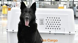 Tierpfleger flughafen münchen Hund fliegen Lufthansa