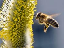 Wo Nektar und Honig fließen: Bienen imGarten Nahrung bieten