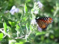 Trumps Grenzzaun bedroht Schmetterlingspark