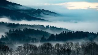 Nebelschwaden im Bayerischen Wald
