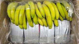 Kokain in Bananenkisten aus Ecuador