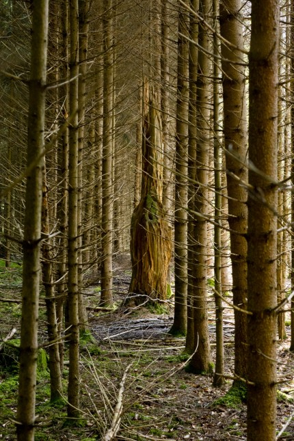 Waldskulpturenweg Ebersberger Forst
