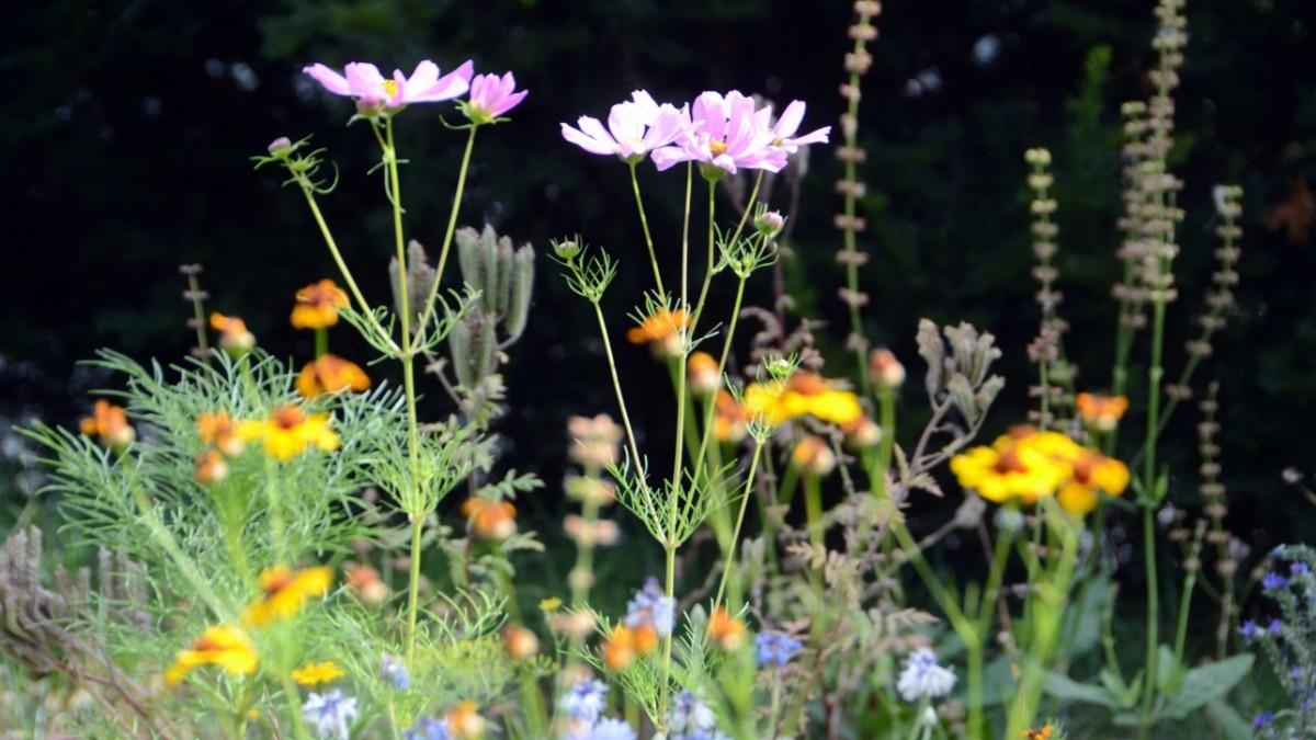 Blühwiesen: Ökologisches Muss - oder Geschäftsmodell?