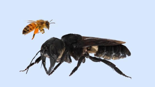 Biologie Zoologie