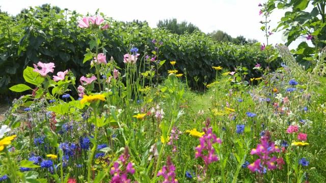 Ebersberg Artenvielfalt im heimischen Garten