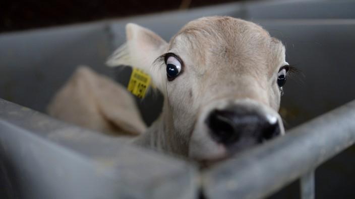 Milchbäuerin