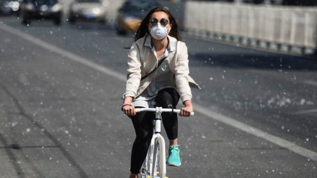 Pollenflug in Peking