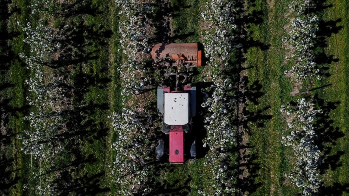 Holsteiner Apfelblüte