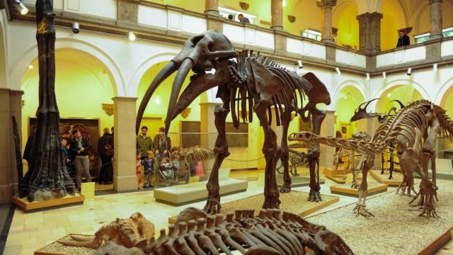 Bayerische Staatssammlung für Paläontologie und Geologie in München, 2014