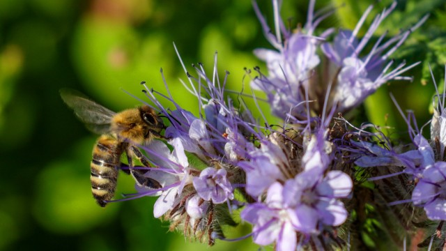 Pflanzen So Lockt Man Bienen In Seinen Garten Stil Suddeutsche De
