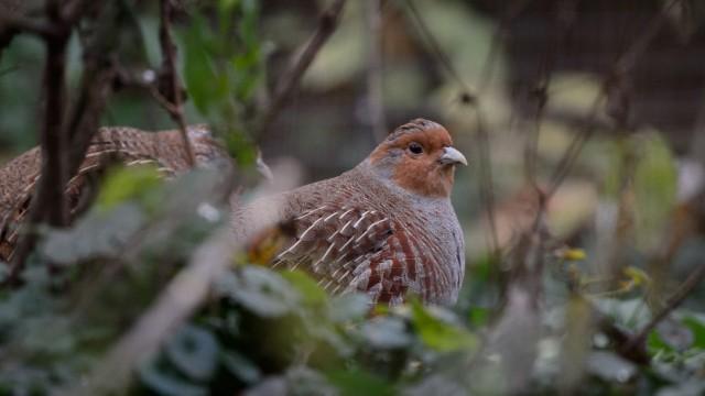 Baden-Württemberg will biologische Vielfalt fördern