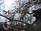 Frühlingsanfang steht vor der Tür - Ab nach draußen (Vorschaubild)