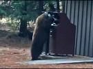 Ranger warnen vor Bären-Besuchen (Vorschaubild)